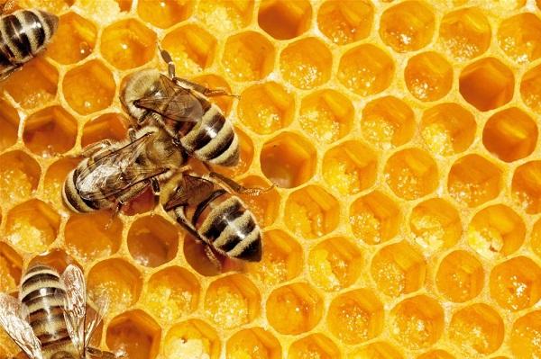 cure gelée royale abeille