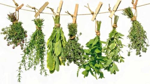 plante brule graisse thermogénique
